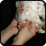 Brit and Rosalie punching a hole in a paper mache hedgehog